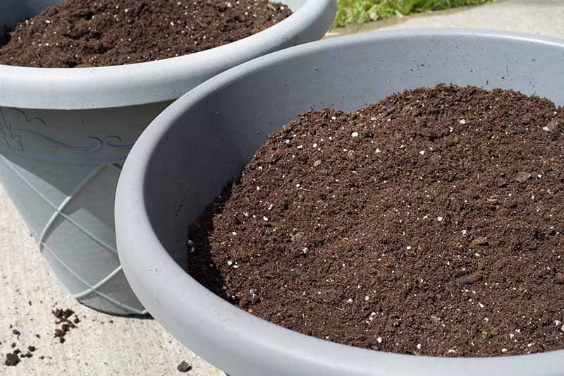 Two gray round containers with rich potting mix set on a concrete surface in bright sunshine.