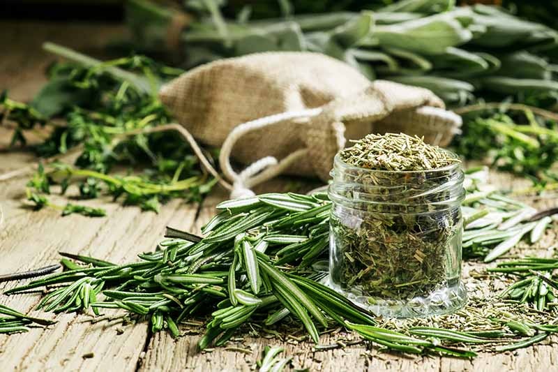 A wooden surface with a small jar of dried rosemary, beside it some fresh sprigs and in the background a small sack surrounded by fresh herbs.