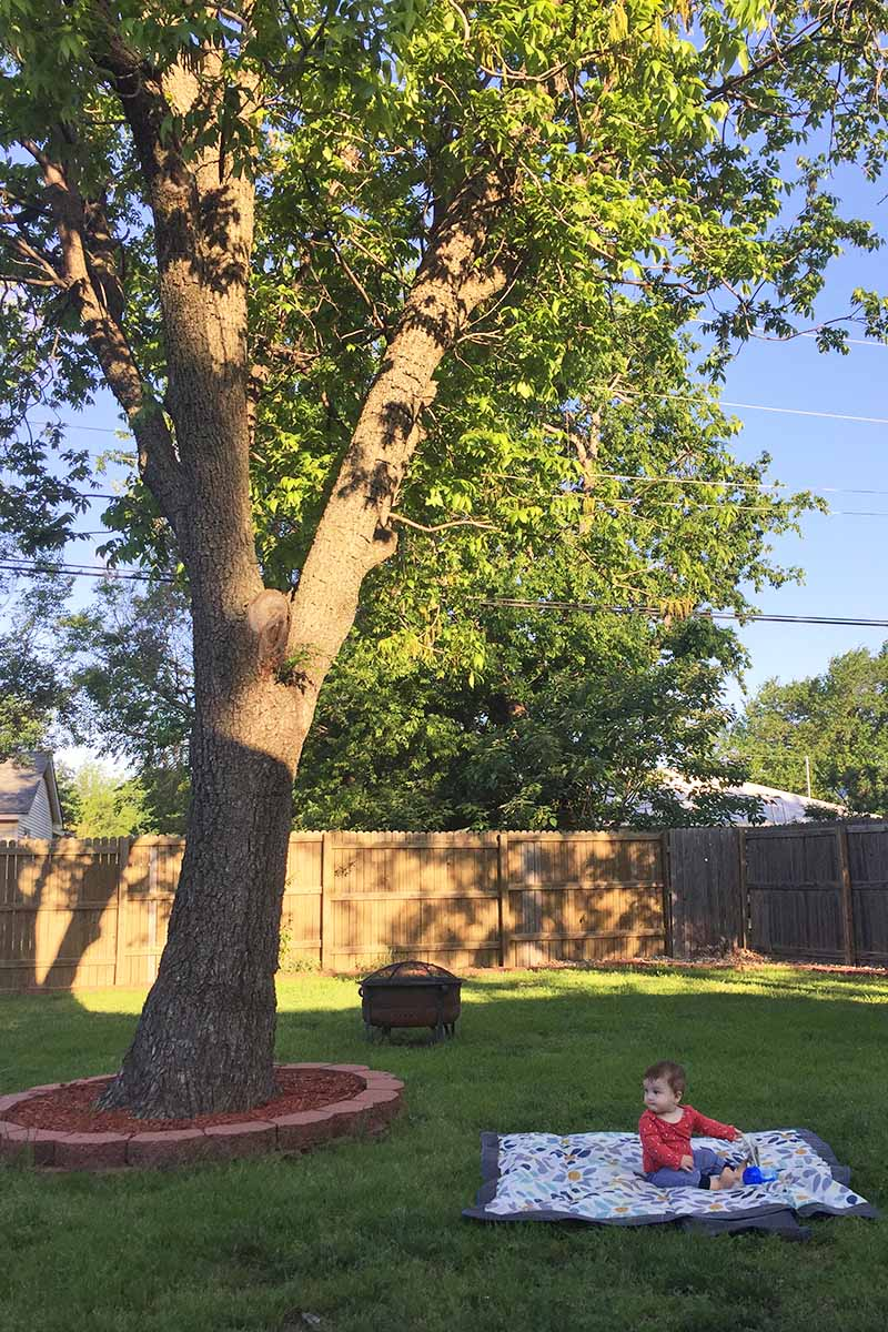 A garden scene with a large pecan tree surrounded by decorative mulch and bricks, with a baby on a mat to the right of the tree in light evening sunshine with a garden fence in the background.