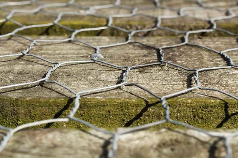 A close up of chicken wire over the top of a wooden pathway fading to soft focus in the background.
