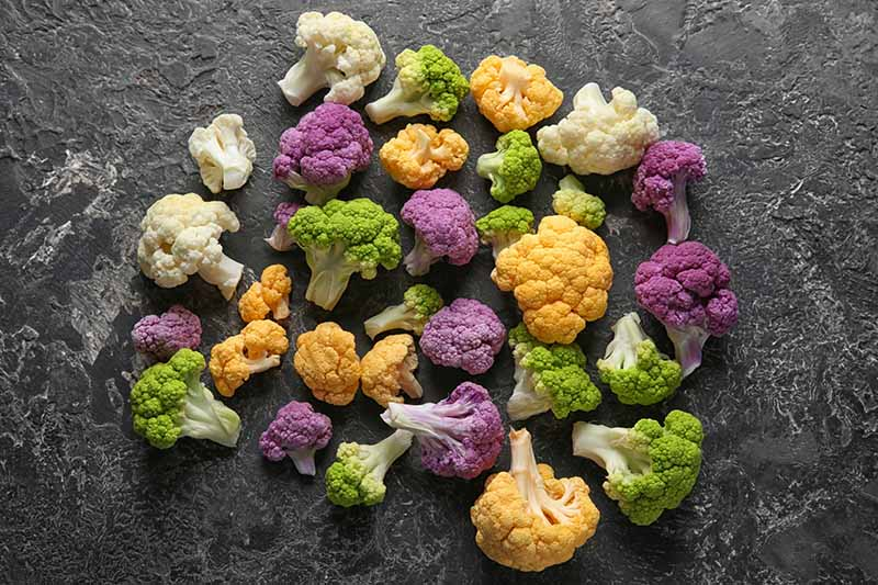 A collection of different colored cauliflower florets, some that are purple, white, green, and yellow, set on a black slate background.