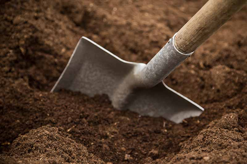 A close up of a garden shovel digging into fresh dark soil fading to soft focus in the background.