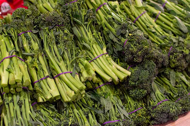 A close up of bunches of broccolini held together with purple elastic bands in a wooden container at a market.
