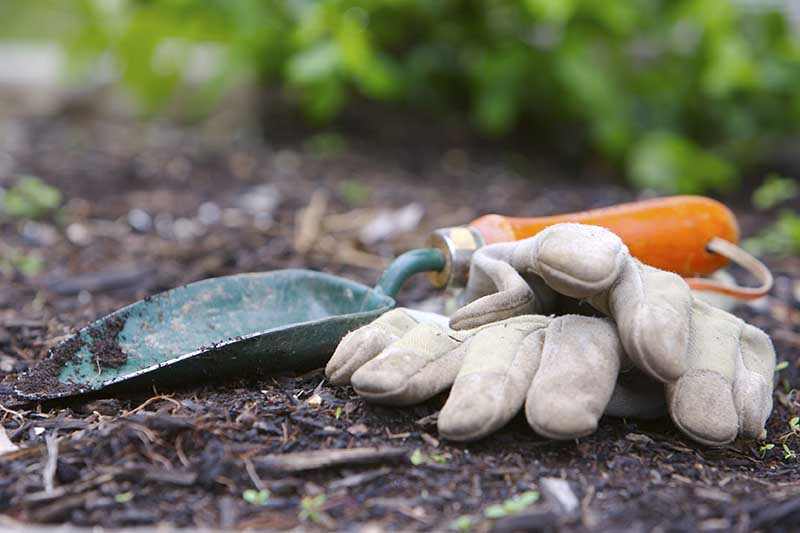 A close up of leather gardening gloves and a green and orange trowel set on a soil surface on a soft focus background.