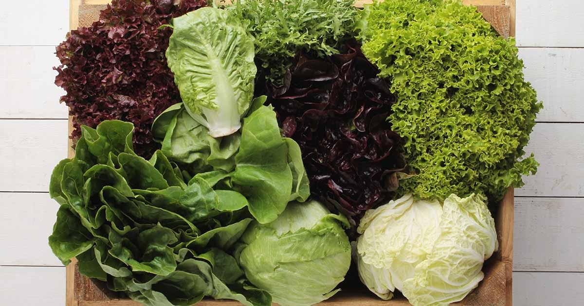 29 Of The Best Lettuce Varieties For Your Garden Gardener S Path
