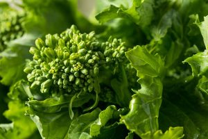 What Is the Difference Between Broccoli Rabe and Broccolini?