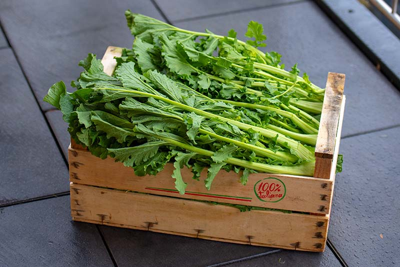 A close up of rapini freshly harvested in a wooden crate set on a dark stone background.