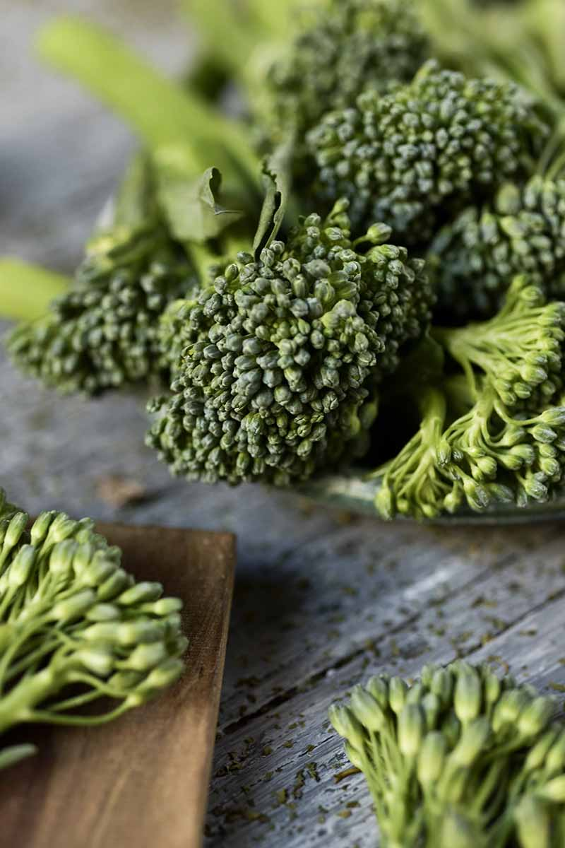 A close up vertical picture of broccolini florets set on a wooden surface, fading to soft focus in the background.