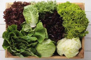 29 of the Best Lettuce Varieties For Your Garden