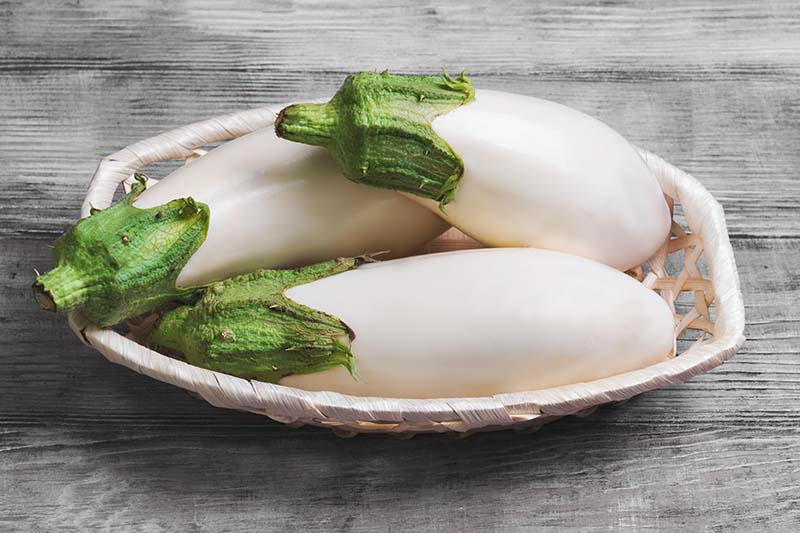 A close up of freshly harvested white aubergines in a small wicker basket set on a rustic wooden surface.
