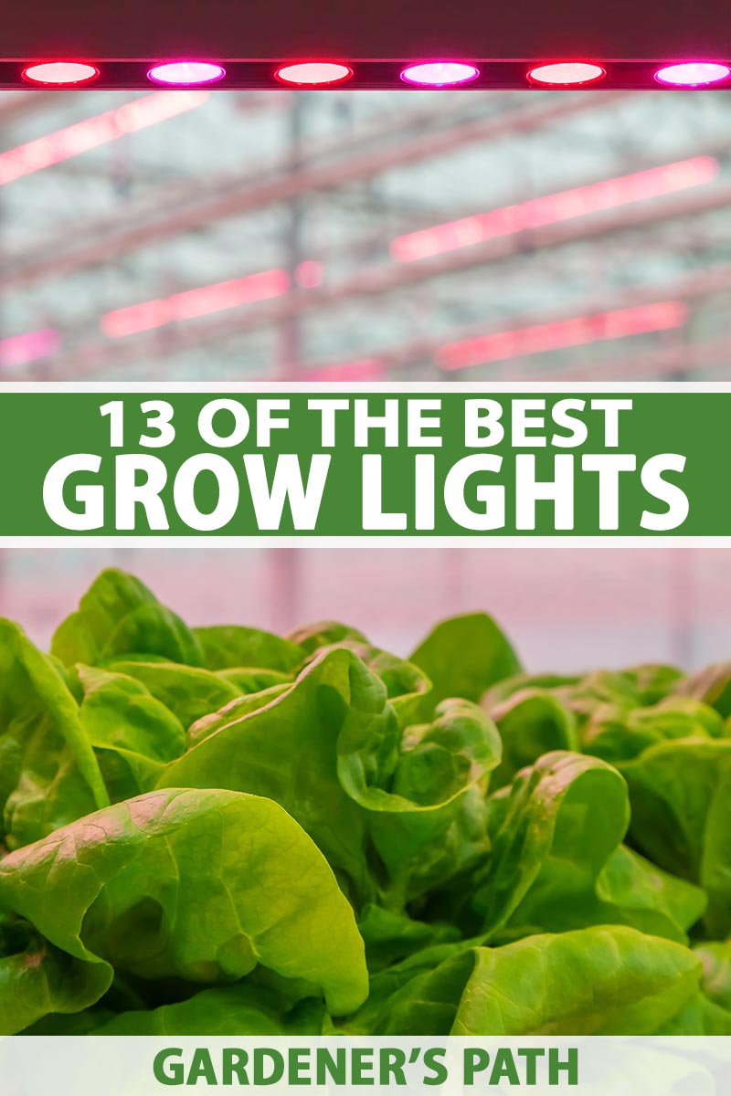 A vertical picture of a healthy crop of indoor lettuce growing under a LED light with a soft focus background. To the center and bottom of the frame is green and white text.