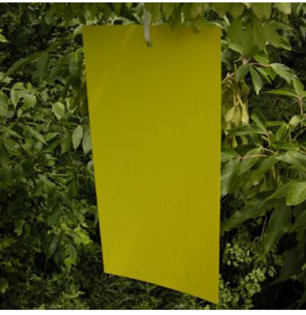 Stiky Strips® Yellow Sticky Traps