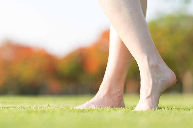 A close up of two bare legs from below the knee, standing on a short, tidy lawn on a soft focus background.