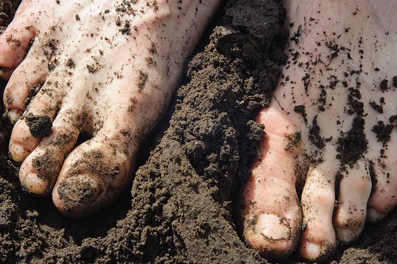 A close up of two bare feet standing in rich dark soil in bright sunshine.