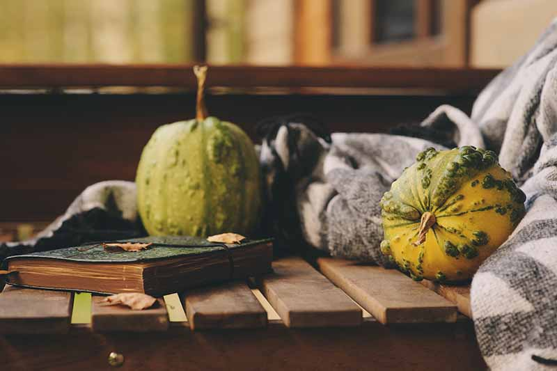 A fall scene with two gourds, a rustic notebook, and a blanket, set on a wooden surface on a soft focus background.