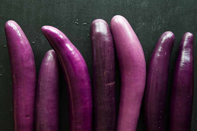 A close up of a variety of small purple eggplant fruits set on a dark gray surface.