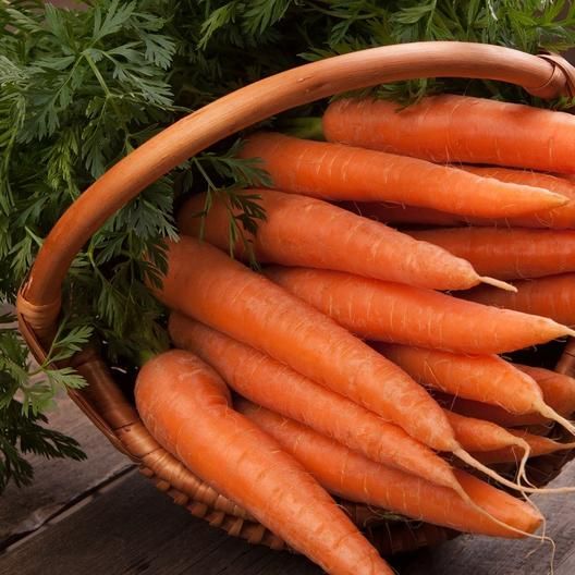 A close up of a basket containing 'Danvers 126' carrot variety with the orange roots cleaned and the foliage still attached.