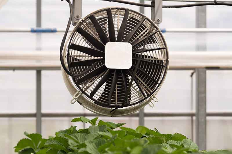 A close up of a fan installed over crops in a greenhouse to provide airflow, the background is windows in soft focus.