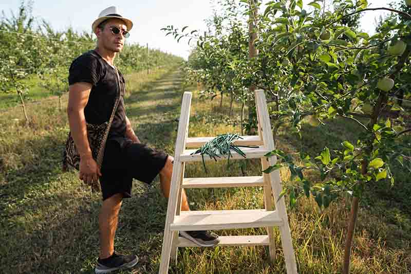 A farmer with a ladder working in an orchard in the bright sunshine.