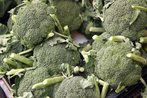 How to Harvest Broccoli: A Crop that Keeps on Giving
