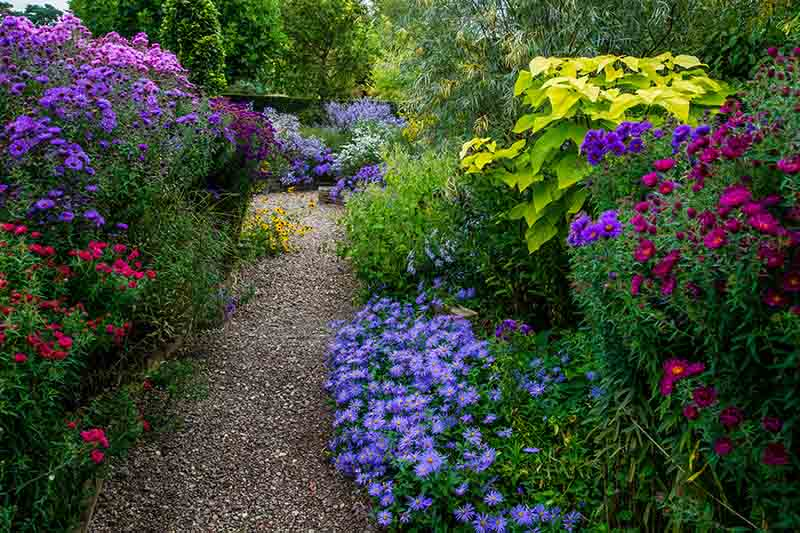 A garden scene showing a path with flowers blooming on either side, with trees in the background.