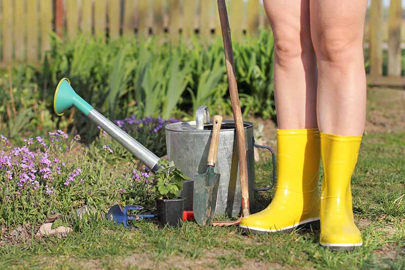 A close up of bare legs with yellow gardening boots, standing in the garden next to a watering can, with a small garden trowel and a gardening rake, on a soft focus background.