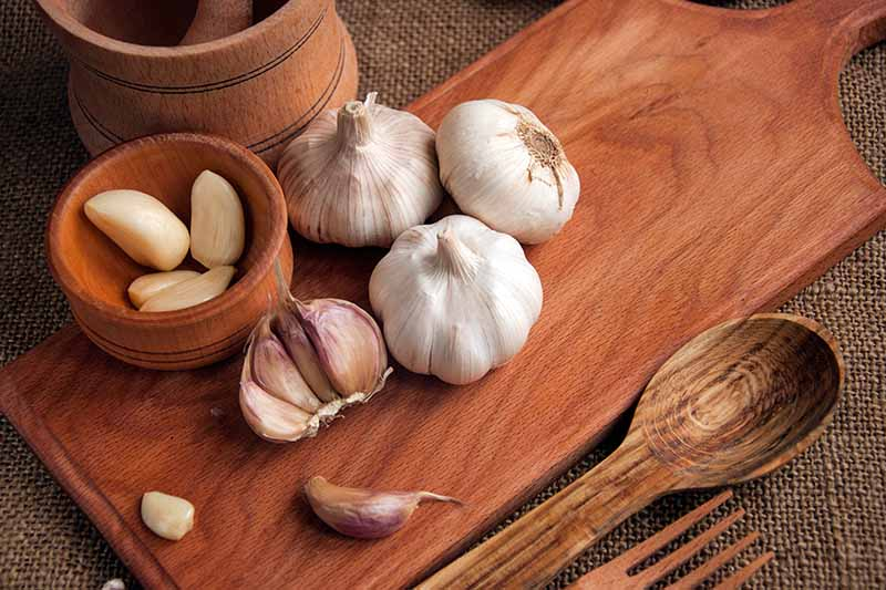 A close up of garlic bulbs with cloves in a small wooden bowl set on a wooden chopping board on a dark brown fabric surface, with a wooden spoon and fork to the right of the frame.