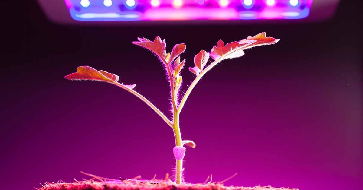 13 Of The Best Grow Lights For Indoor Gardens Gardener S Path