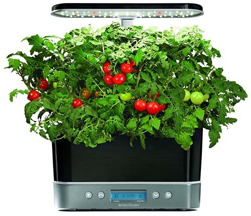 A close up of a hydroponic indoor gardening system with tomatoes growing. The unit has a digital screen at the base and a lighting canopy at the top.