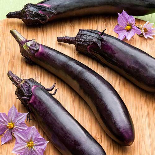 A top down picture of the 'Ichiban' eggplant variety with long purple fruits set on a wooden surface with two purple flowers scattered to the left and right of the frame.