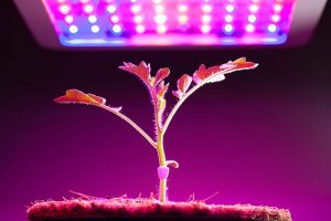 13 of the Best Grow Lights for Indoor Plants and Seedlings