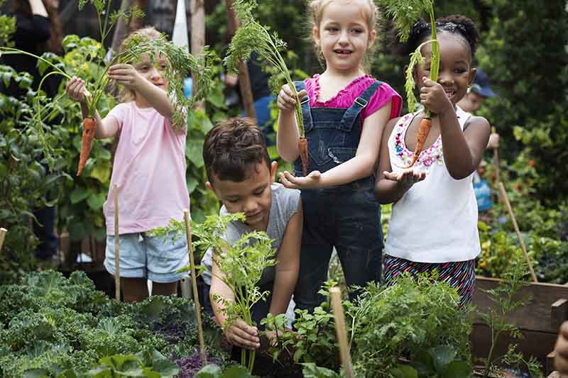 Four kids in the garden pulling out carrots from a raised garden bed and holding up the bright orange roots. In the background is a garden scene in soft focus.