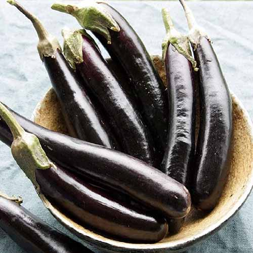 A close up of a small bowl containing the dark purple, long thin fruits of the 'Little Fingers' variety of eggplant, set on a dark gray surface.