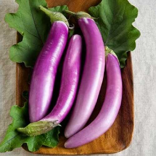 A close up of light purple Asian eggplants set on a wooden plate with large green leaves surrounding them.