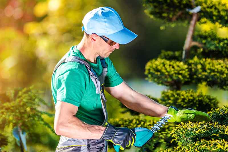 A close up of a man trimming a hedge with a small machine, wearing a hat and protective glasses, on a soft focus background.