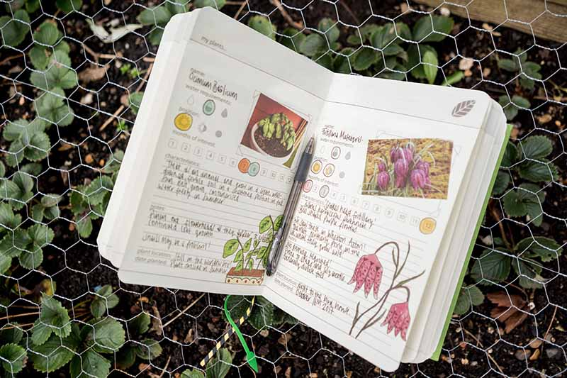 "A close up of the open internal pages of ""My Gardening Handbook"" with a pen, set on the top of a chicken wire frame with strawberry plants growing in the ground."