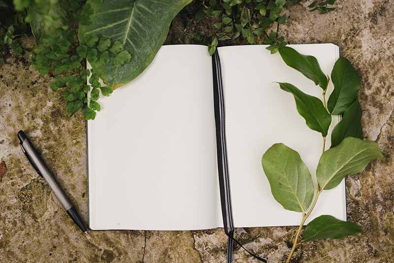 A close up of a notebook open, with blank pages and leaves surrounding it with a pen to the left of the frame set on a stone surface.