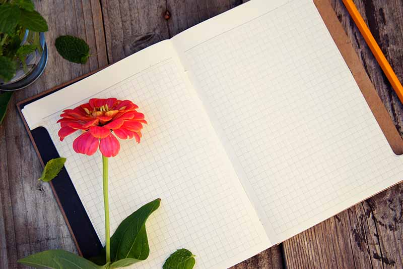 A top down close up of a notebook lying open on a rustic wooden surface with a red flower to the left of the frame and a pencil to the right.