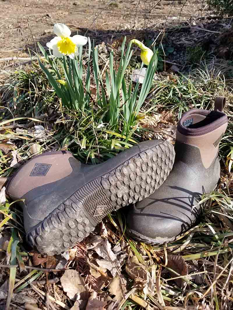 A vertical picture showing a pair of the Original Muck Boot Company's Muckster II Ankle shoes, pictured on a lawn with daffodils in the background.