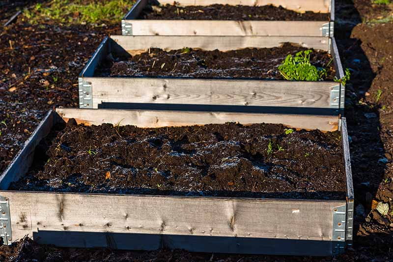 A set of three raised garden beds with freshly raked soil in bright sunshine in the late winter garden.