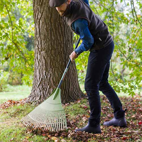 A man wearing Muckster II Ankle boots pictured with a large green rake under a tree raking up fallen leaves in the autumn with a garden scene in soft focus in the background.