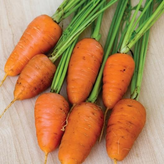 A close up of small stubby 'Royal Chantenay' carrots, cleaned with the foliage still attached and set on a wooden surface.