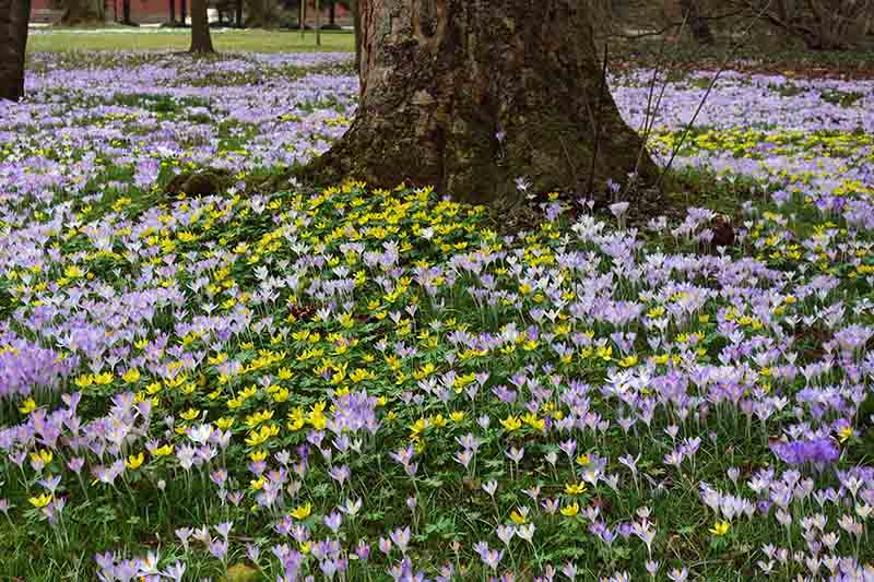 A large tree trunk with a variety of spring flowers blooming in the grass beneath it.