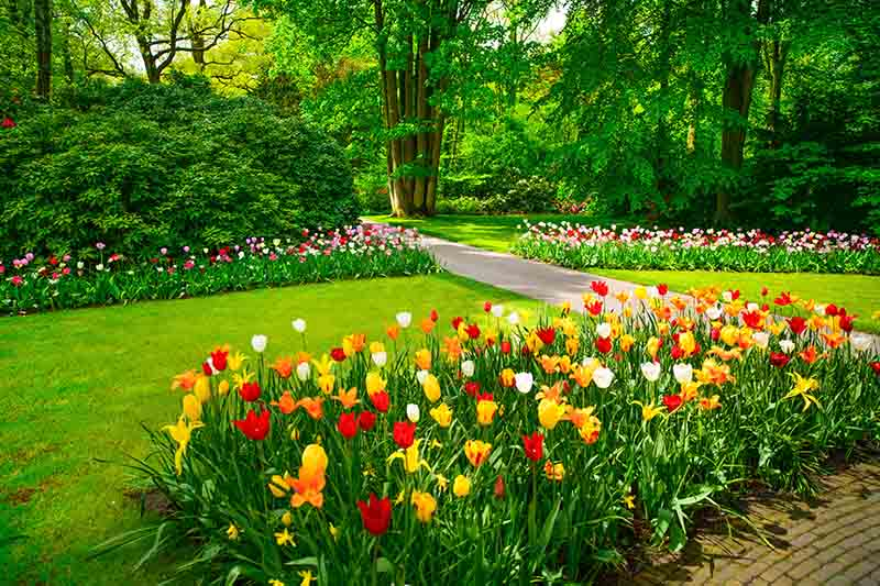 A garden scene with trees in the background and a lawn with borders full of spring flowers.