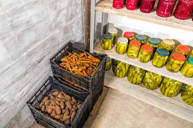A storage basement with shelves containing jars of pickled garden produce and some black plastic crates storing root vegetables.