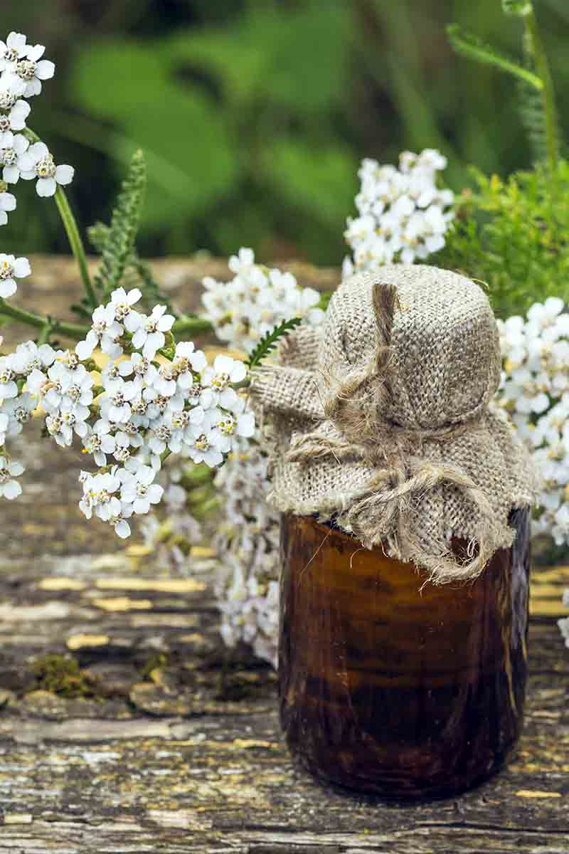 A vertical close up picture of a small glass bottle with a hessian top set on a wooden surface with Achillea millefolium in the background.