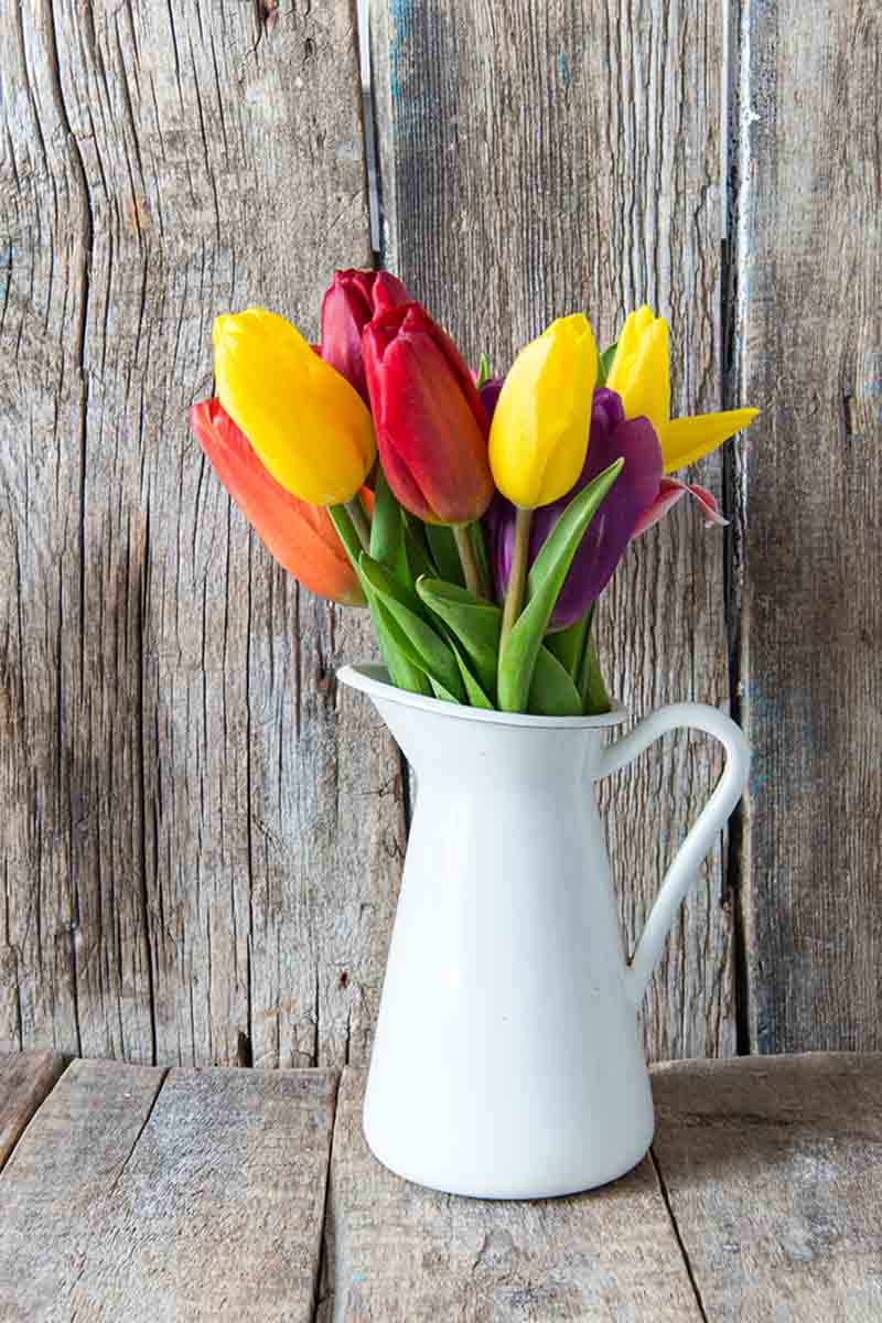 A vertical picture of a white ceramic vase containing different colored tulips in red, yellow, and purple with a rustic wooden background.