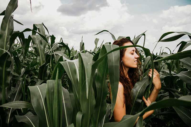 A young woman with bare shoulders and long brown hair in a corn field with her eyes closed, with white clouds in the background.