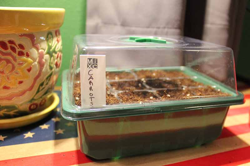 A close up of a green plastic seed tray with a plastic humidity top and a white label, on a soft focus background, with a colorful ceramic pot to the left of the frame.