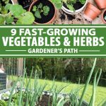 A collage with various photos of fast-growing herbs and vegetables.